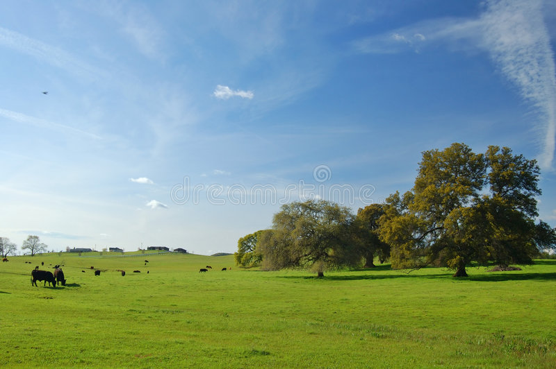 Spring countryside royalty free stock image