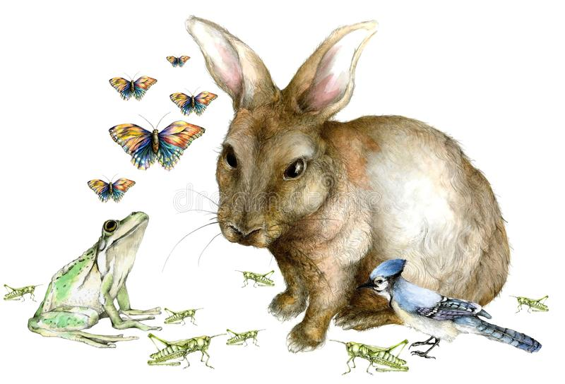 Spring Creatures Background. A watercolor and graphite illustration of a rabbit, blue jay, frog, grasshoppers, and butterflies stock illustration