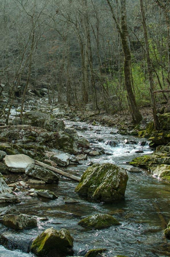 Spring Creek at Blanchard royalty free stock photo