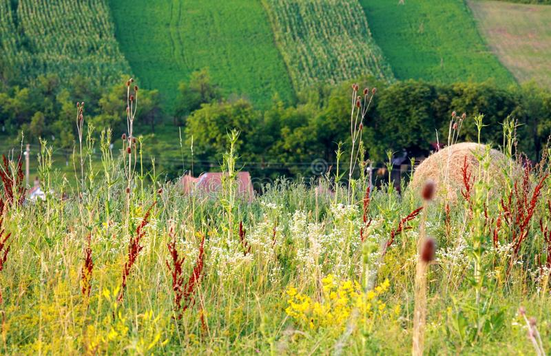 Spring crops on hill. Landscape with crops and wild flowers to Baita a small village near Cluj ,Romania stock images