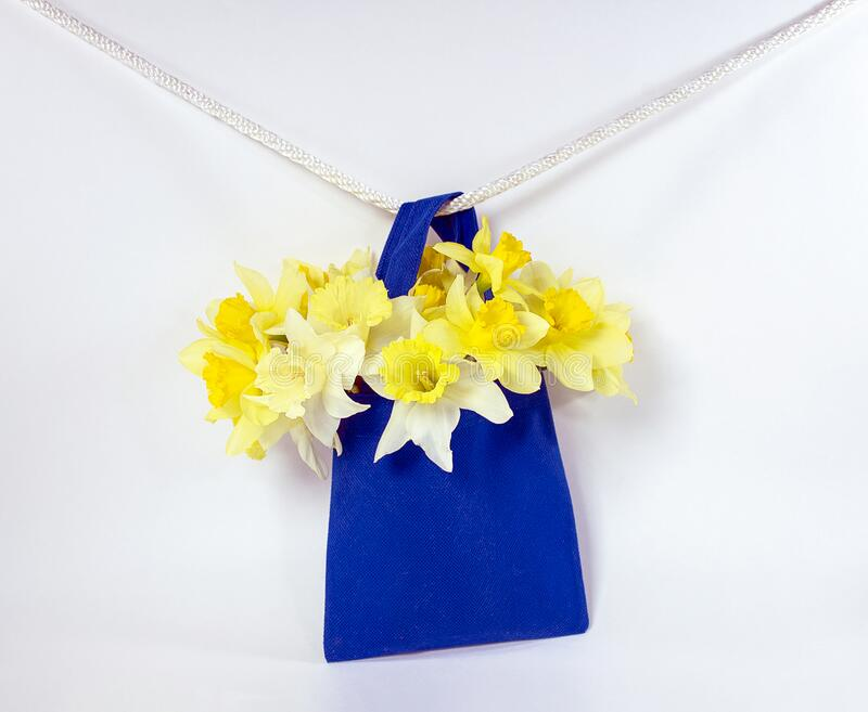 Yellow daffodils in blue bag royalty free stock photo