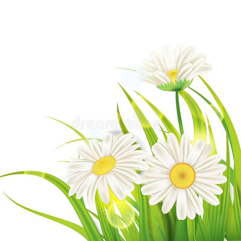 Spring daisies background fresh green grass, pleasant juicy spring colors, vector, illustration, template, banner stock illustration