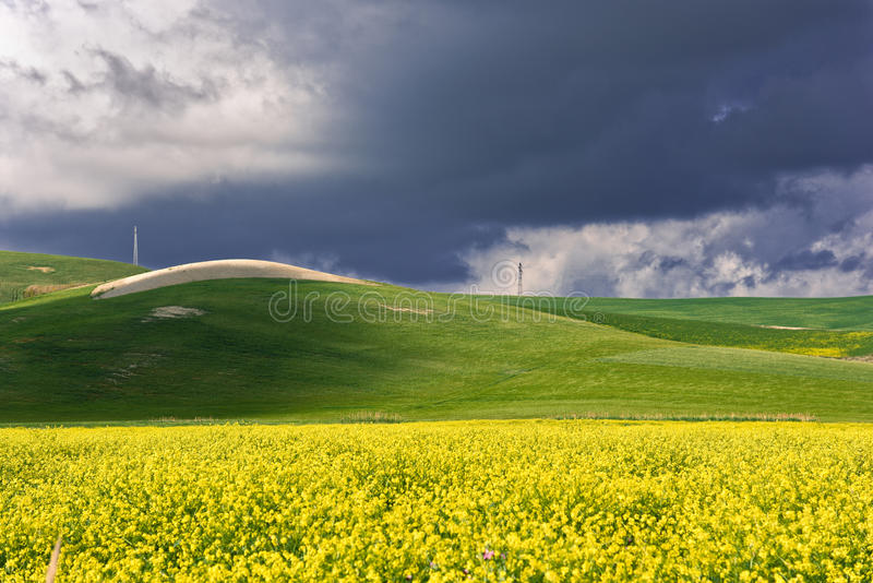 Spring dandelion fields and blu sky royalty free stock photography