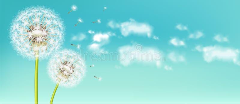 Spring dandelion flower Vector realistic. Sky background soft bokeh illustrations. Spring dandelion flower Vector realistic. Sky background soft bokeh stock illustration