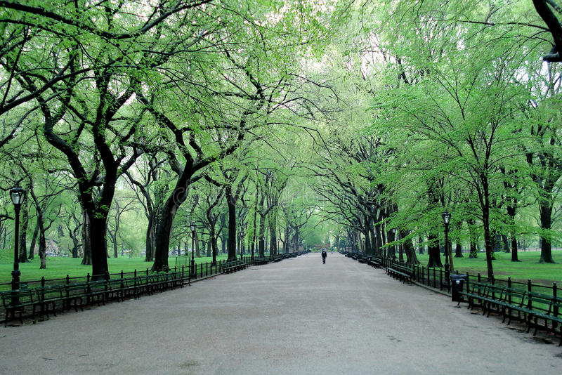Spring day in Central Park, New York stock image