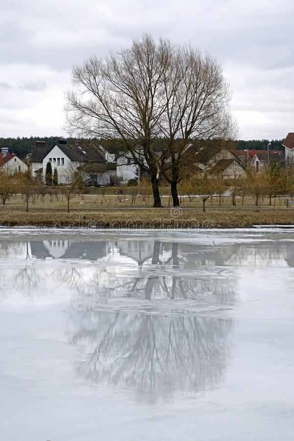 Pond covered with ice and melt water. Willow on the shore and reflection on the water surface. Cityscape. Spring day in March. Pond covered with ice and melt royalty free stock images