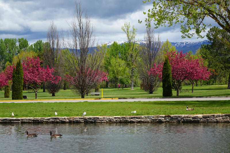 Spring Day at a Park in Boise, Idaho. Crabapple trees bloom on a spring day in an Idaho park with the Boise mountains in the background stock images