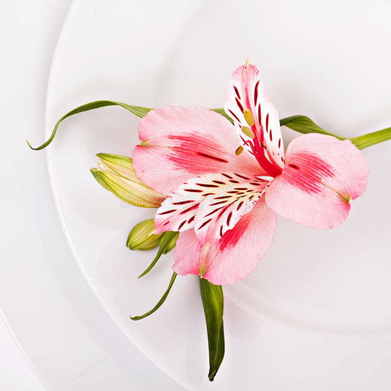 Spring decoration with pink alstromeria stock photos