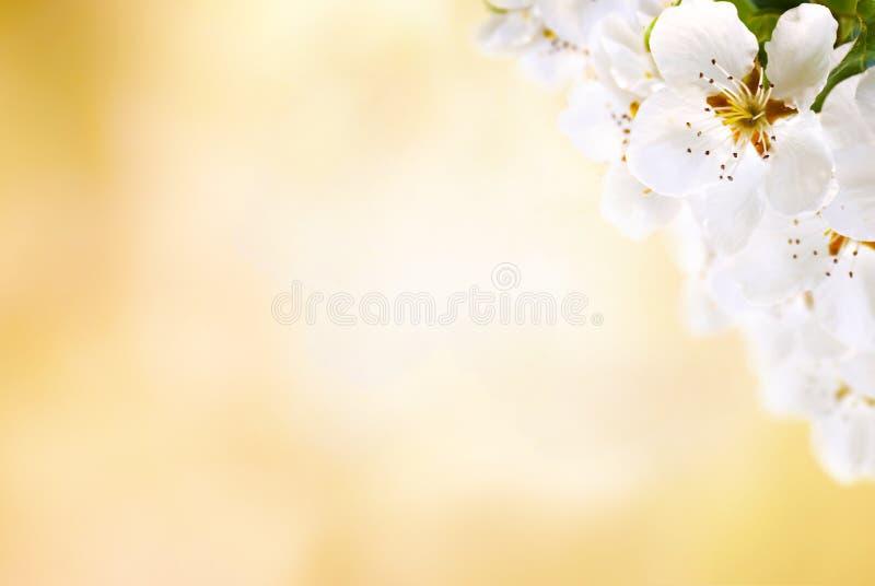 Download Spring stock image. Image of focus, elegant, flowers - 34215149