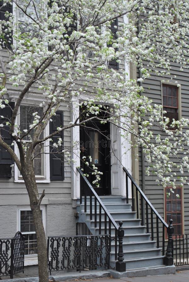 Download Spring Doorway stock photo. Image of home, flowers, doorway - 23999740