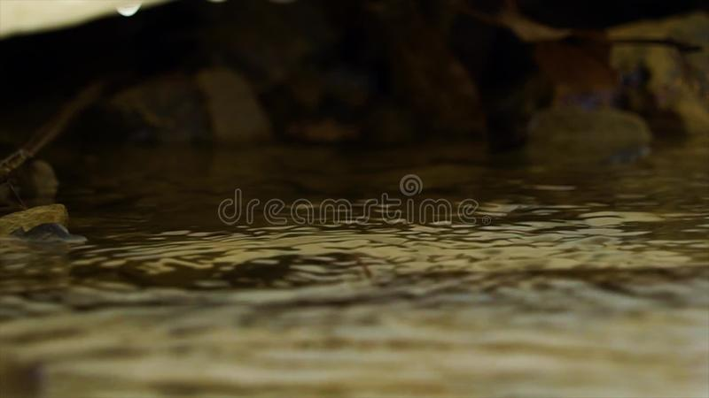 Spring drops stock footage