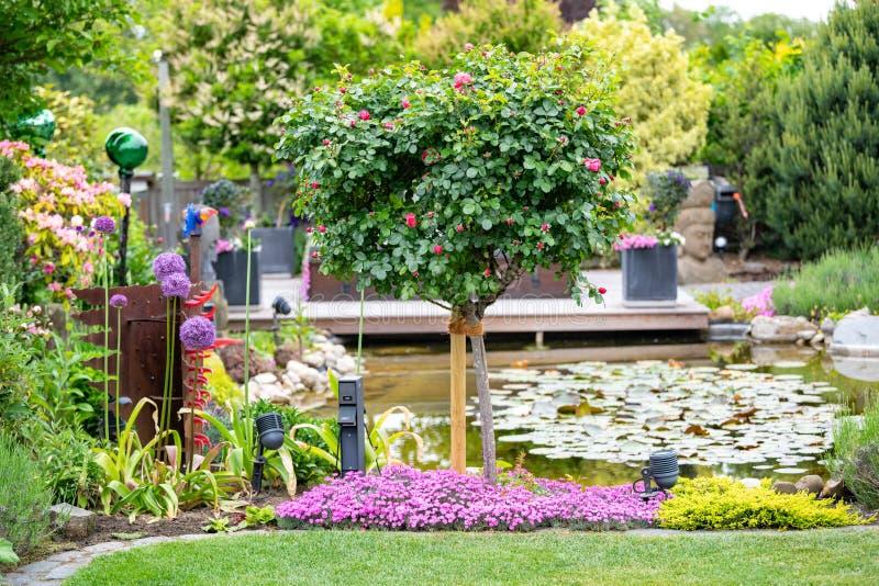Spring in beautiful garden, pinks, allium, roses flowering on garden pond stock photography