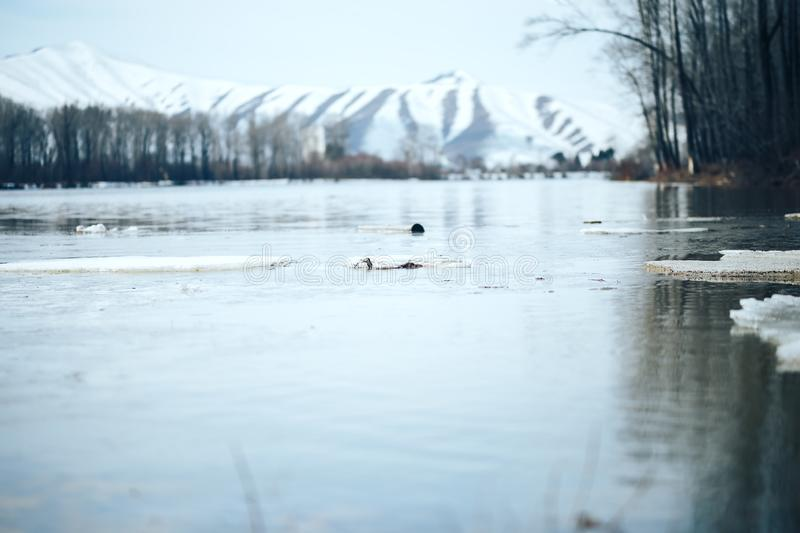 Spring in east Kazakhstan landscape snowy mountines and river with ice royalty free stock photography