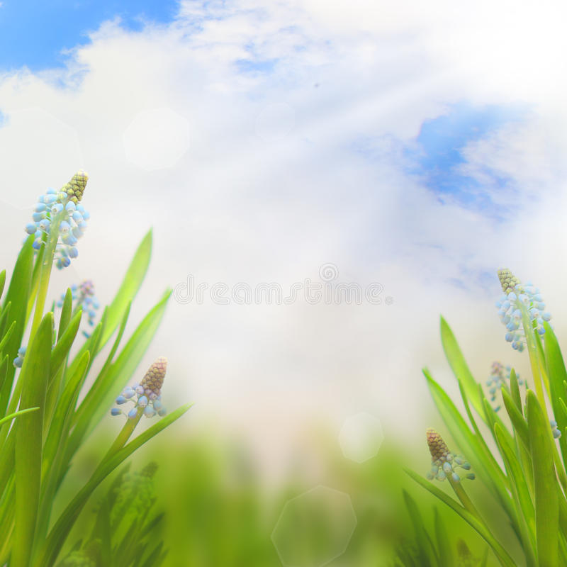 Spring Easter background with beautiful flowers stock photos