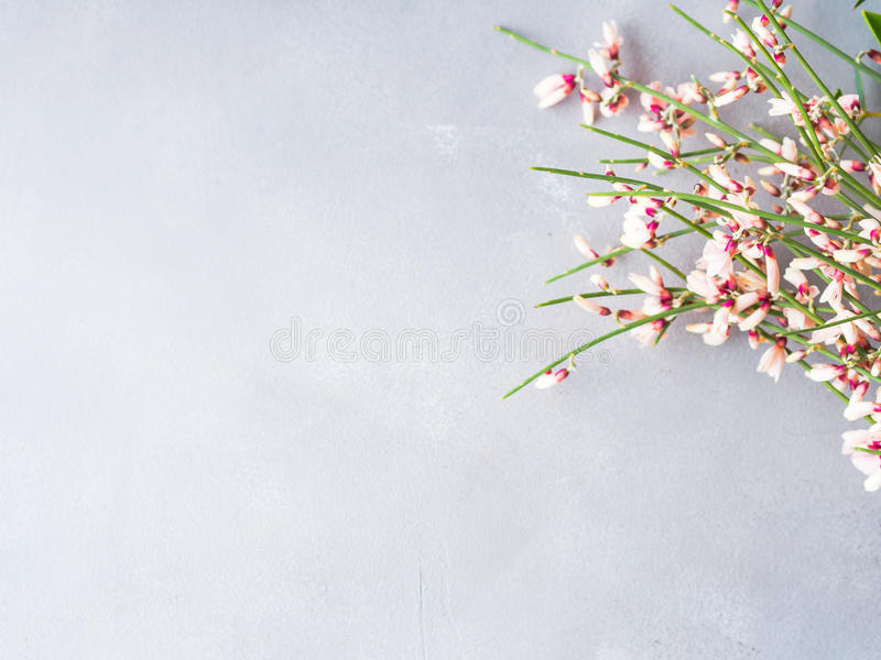 Spring easter broom floral minimal pastel color background. With copy space. Top view. Woman Valentine mother day greeting card royalty free stock photography