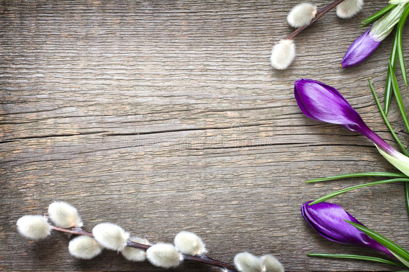 Spring easter floral abstract background with crocus and willow royalty free stock image