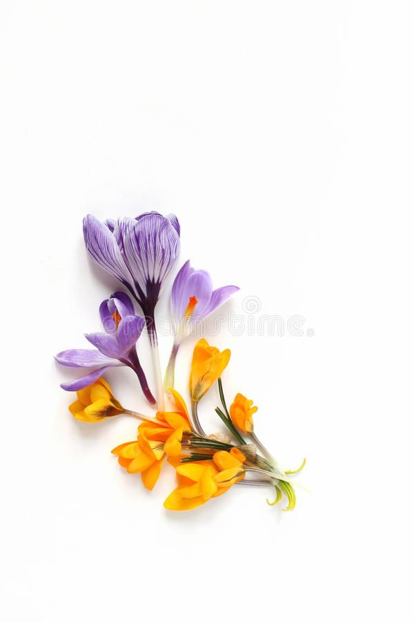 Spring, Easter floral composition. Yellow and violet crocuses flowers on white wooden background. Vertical Styled stock royalty free stock photos