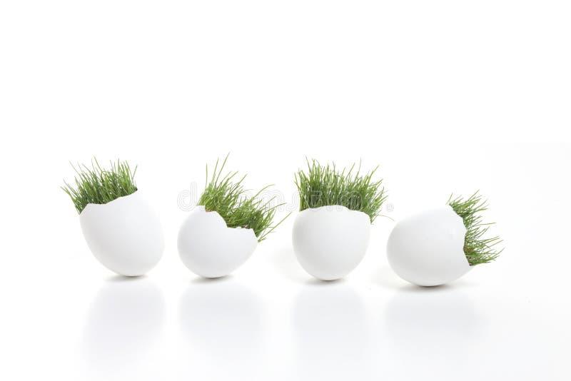 Spring Eggs stock image