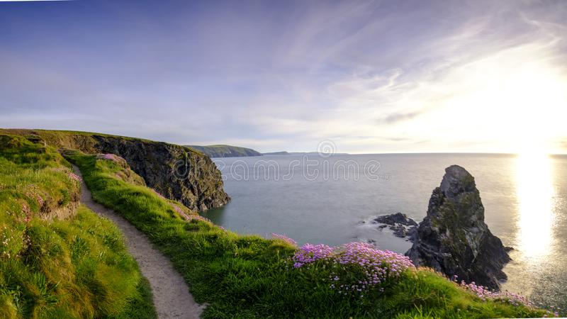 Spring evening light on Thrift `Sea Pinks` in Ceibwr Bay, Pembroke, Wales. Ceibwr Bay, UK - May 22, 2019:  Spring evening light on the coastal path and Sea Pinks royalty free stock images