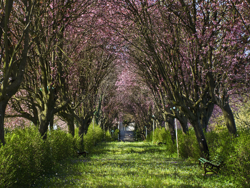 Spring in the fairyland royalty free stock photos