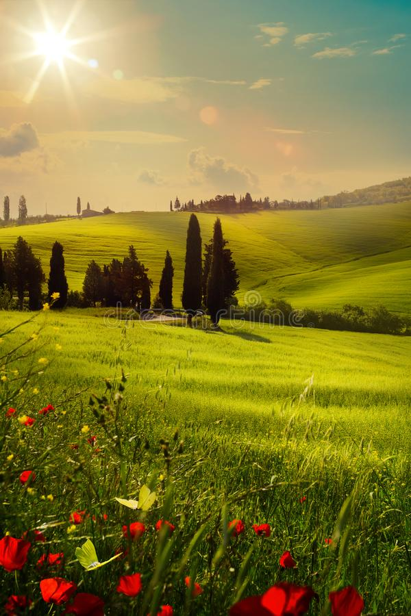 art spring farmland and country road; tuscany countryside rolling hills royalty free stock image