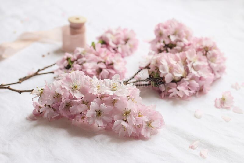 Spring feminine scene. Closeup of blossoming japanese cherry tree branches, pink petals on white linen table cloth. Background, Asian composition with sakura royalty free stock images