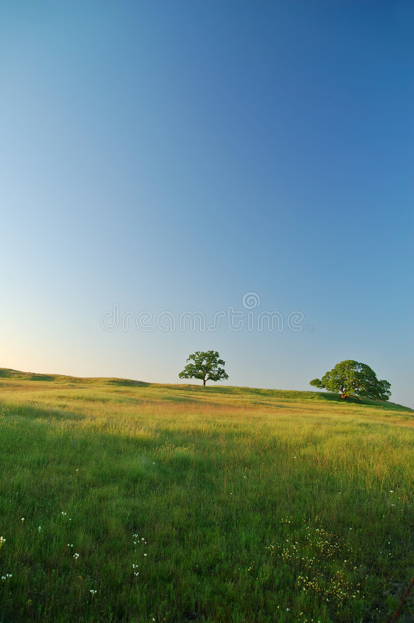 Spring Field stock images