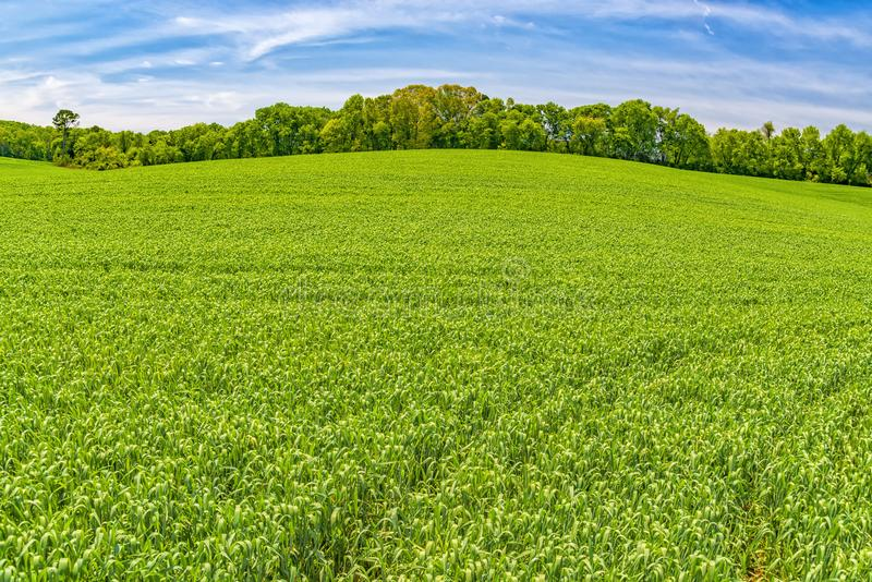 Spring Field Background With Copy Space stock photo