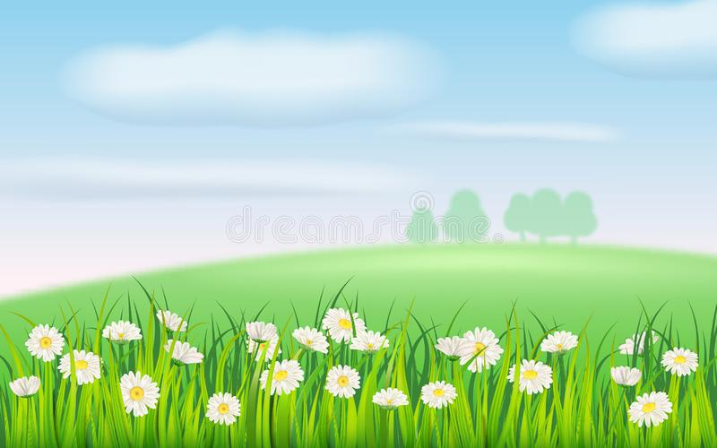 Spring field of flowers of daisies, chamomile and green juicy grass, meadow, blue sky, white clouds. Vector. Spring field of flowers of daisies, chamomile and royalty free illustration
