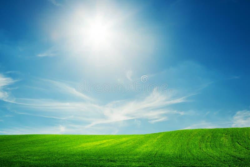 Spring field of green grass. Blue sunny sky royalty free stock photos