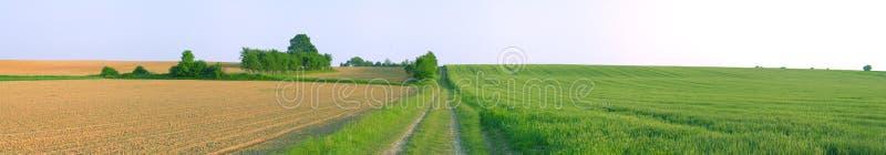 Spring field panorama stock image