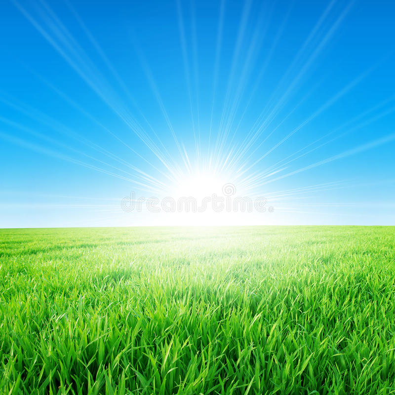 Spring field under the morning sun. Fresh field of green grass growing slowly under the rising sun stock images