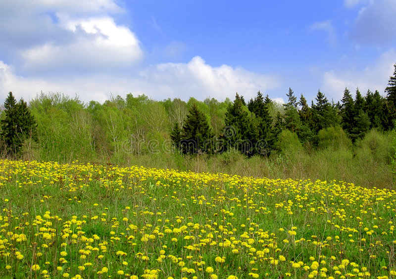 Spring fields royalty free stock photos