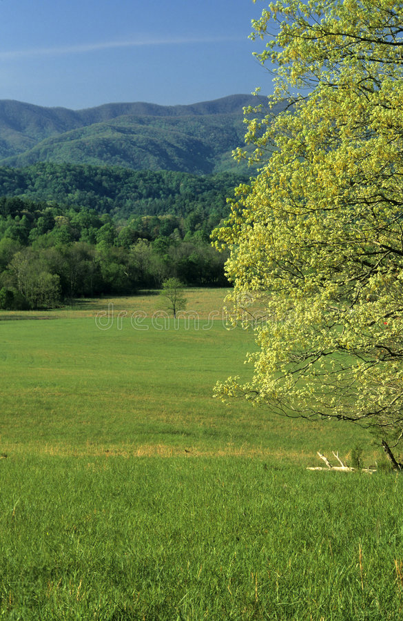 Spring, Fields, Mountains royalty free stock image