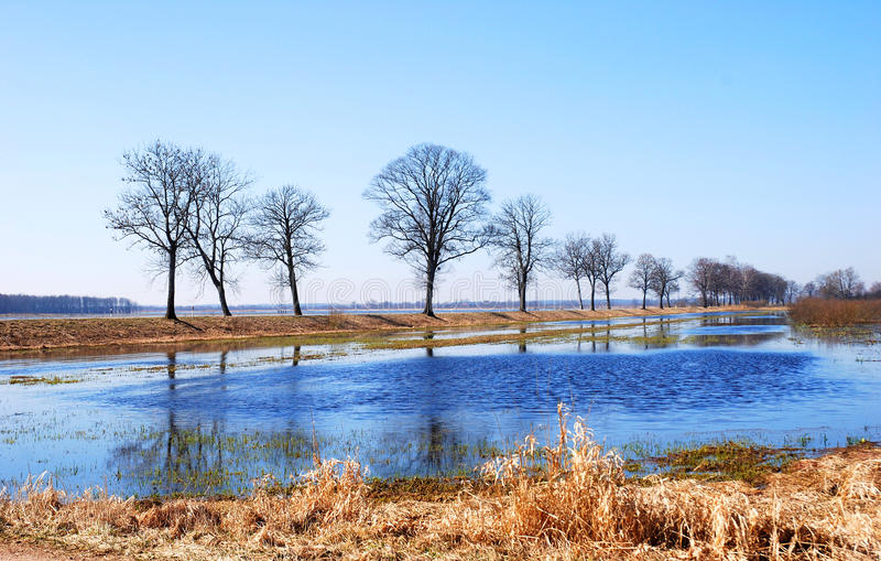 Download Spring flood stock photo. Image of grass, flooding, background - 11303420