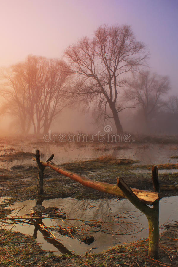 Download Spring flood stock image. Image of early, morning, colorful - 19741497
