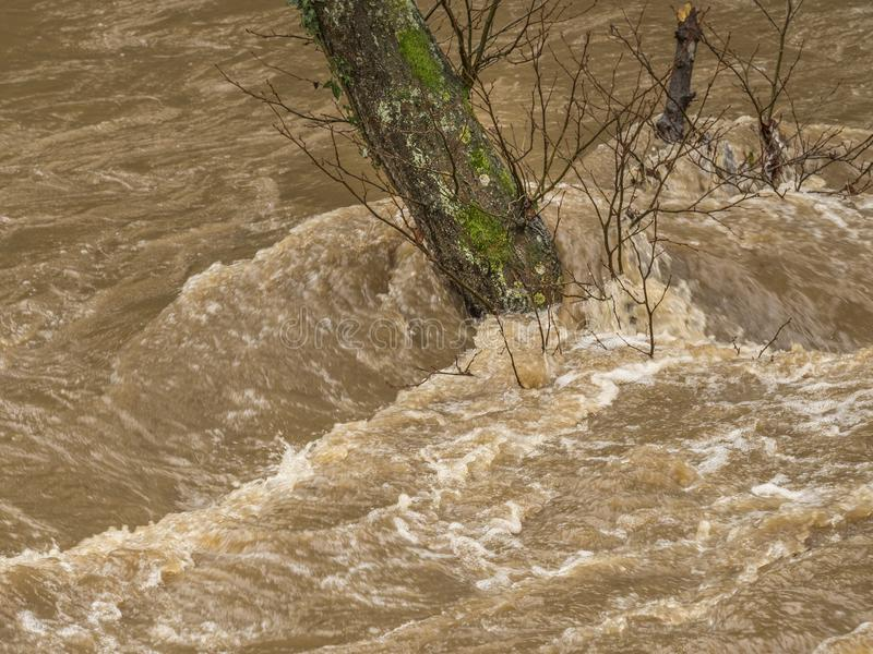 Spring Flooding and Fast Moving Melt Water During Heavy Rain. The Water Level Is Dangerously High And The River Has Burst It`s Banks. A Tree Has becoming stock photo