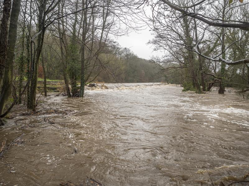 Spring Flooding and Fast Moving Melt Water During Heavy Rain. The Water Level Is Dangerously High And The River Has Burst It`s Banks. Trees are becoming stock photos