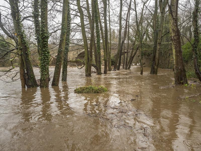 Spring Flooding and Fast Moving Melt Water During Heavy Rain. The Water Level Is Dangerously High And The River Has Burst It`s Banks. Trees are becoming stock images