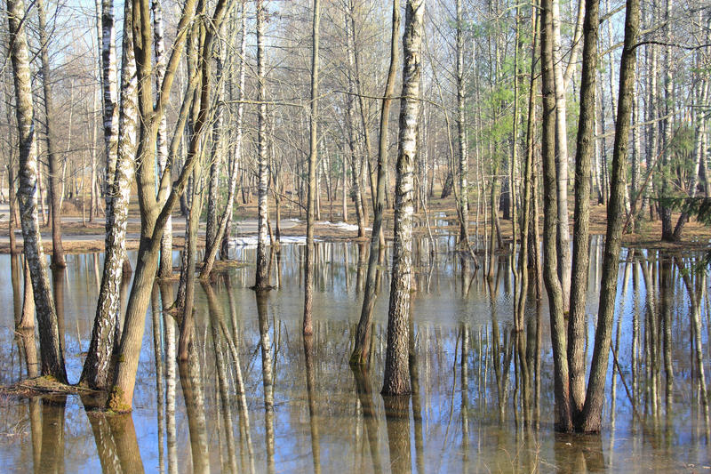 Spring flooding in the forest stock images