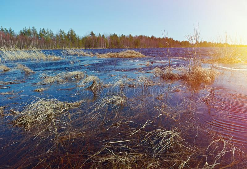 Spring flooding on the lake. Russian landscape in the spring forest. Spring flooding on the lake stock photography