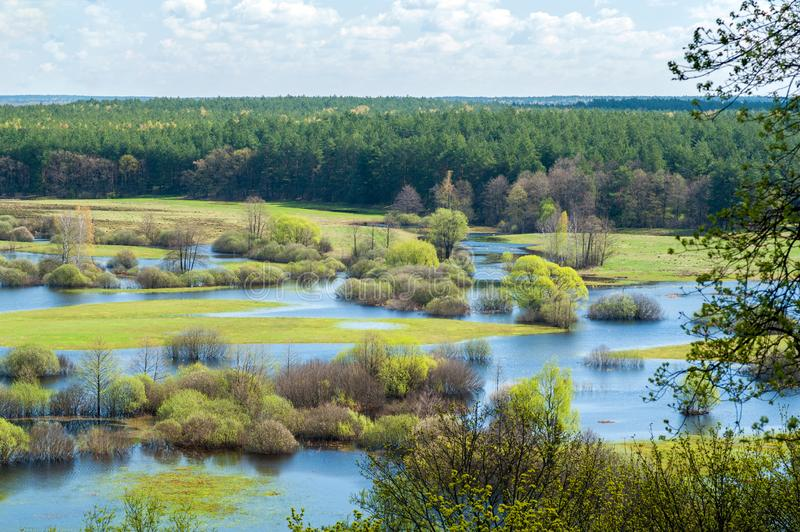 Spring flooding on the river against the background of the coniferous forest and blue sky with clouds. Selective focus royalty free stock photography