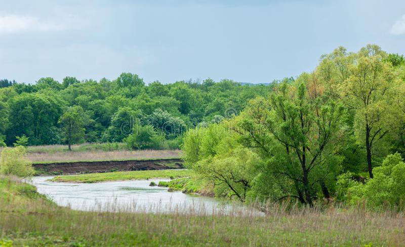 Spring flooding river. Mixed forest royalty free stock image