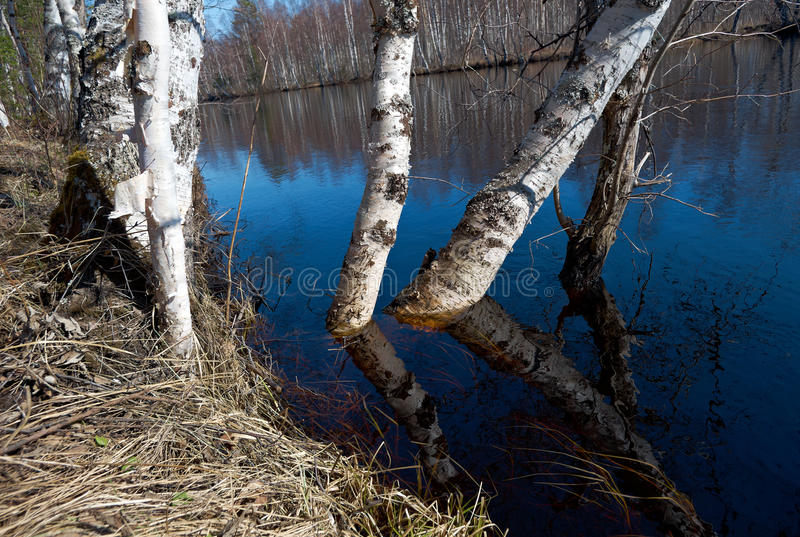 Spring flooding on the river. Russian landscape.Spring flooding on the river Arkhangelsk region royalty free stock photos