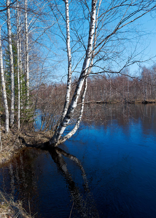 Spring flooding on the river. Russian landscape.Spring flooding on the river Arkhangelsk region stock photography