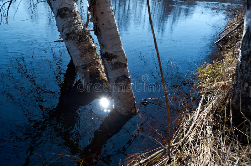 Spring flooding on the river. Russian landscape.Spring flooding on the river Arkhangelsk region stock photos