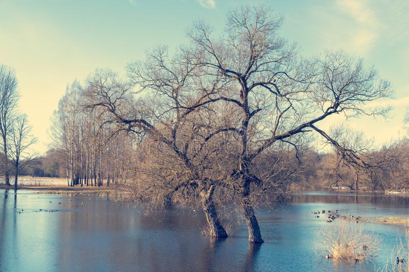 Spring flooding on the river royalty free stock image