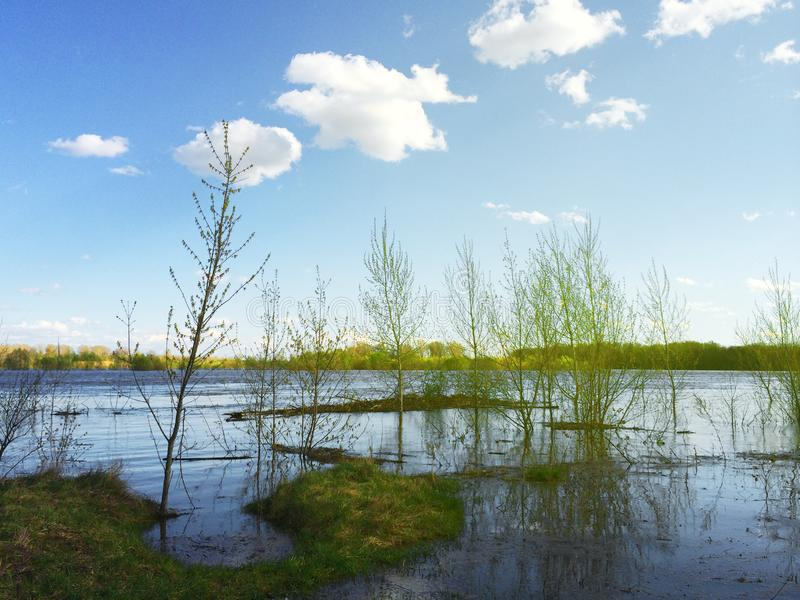 Spring flooding on the river - waterlogged trees royalty free stock photos