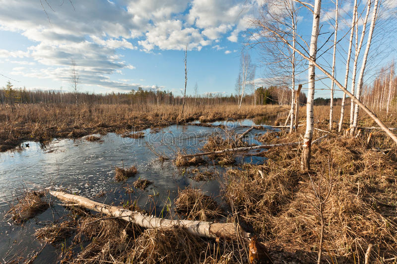 Spring flooding. Springtime flooding in rivers with ice stock photography