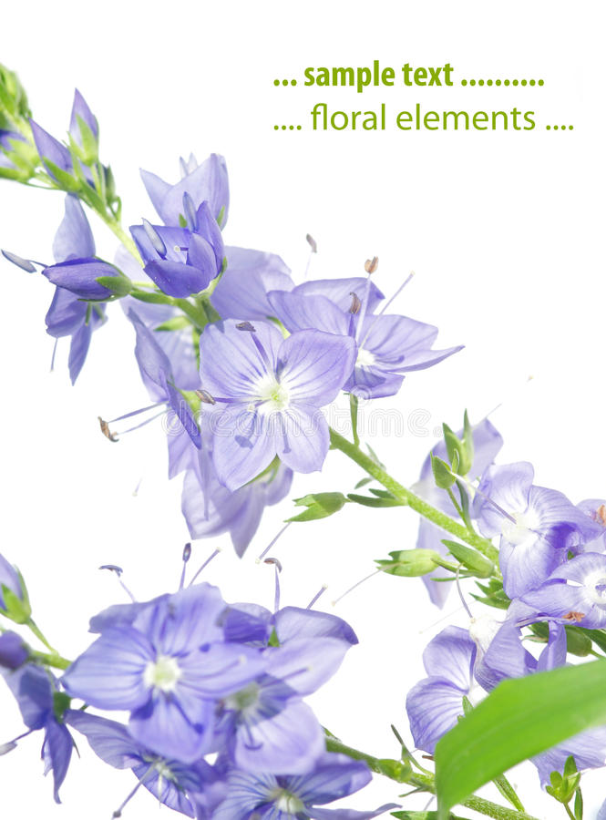 Spring flora up close. Lovely spring flora against white background royalty free stock photo